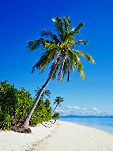 Картинка Филиппины Тропический Берег Море Пальма Пляже