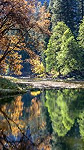 Фотография США Парк Озеро Йосемити Деревьев Отражается Природа