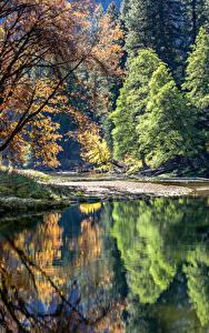 Фотография США Парк Озеро Йосемити Деревьев Отражается