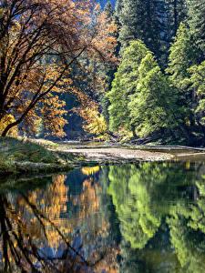 Фотография США Парки Озеро Йосемити Деревьев Отражение Природа