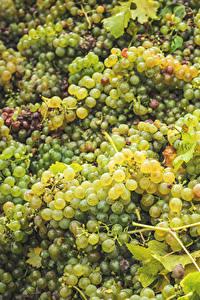 Обои Виноград Много Еда
