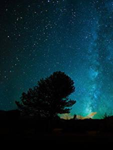 Фотография Небо Звезды Ночные Дерево Природа