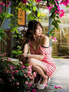 Картинки Азиатка Поза Платье Боке Шатенки Сидит