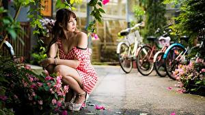 Картинки Азиатка Поза Платье Боке Шатенки Сидит молодая женщина
