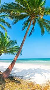 Обои Море Тропики Пальмы