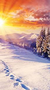 Фото Рассветы и закаты Зима Пейзаж Снеге Ель Лучи света Солнца
