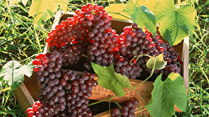 Картинка Виноград Вблизи Листва Пища