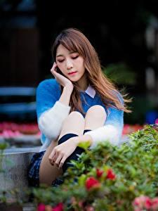 Фотография Азиатки Парки Миленькие Размытый фон Шатенка Сидя Девушки