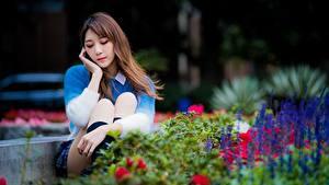 Фотография Азиатки Парки Миленькие Размытый фон Шатенка Сидя