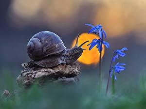 Фотографии Улитки Вблизи Рассветы и закаты Солнца Животные