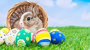 Картинки Кролики Пасха Яйца Трава животное