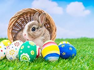 Картинки Кролики Пасха Яйца Трава Животные