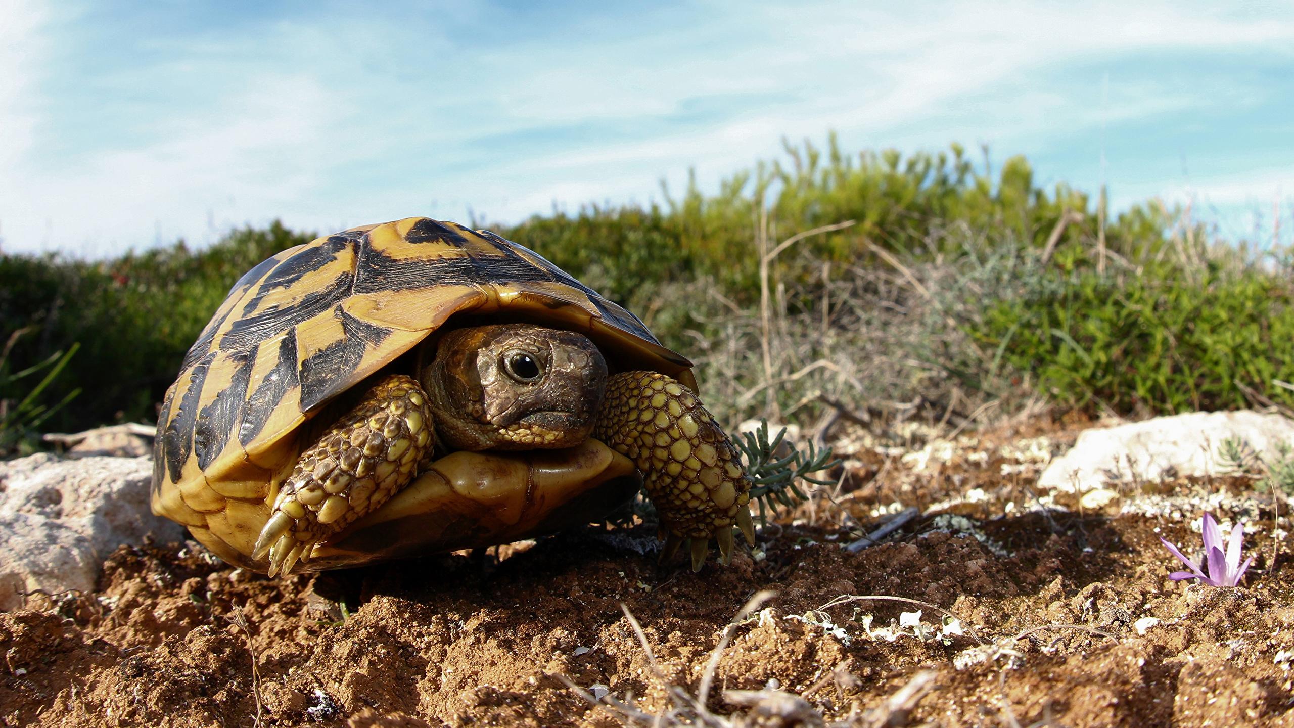природа животные черепаха крупный план без смс