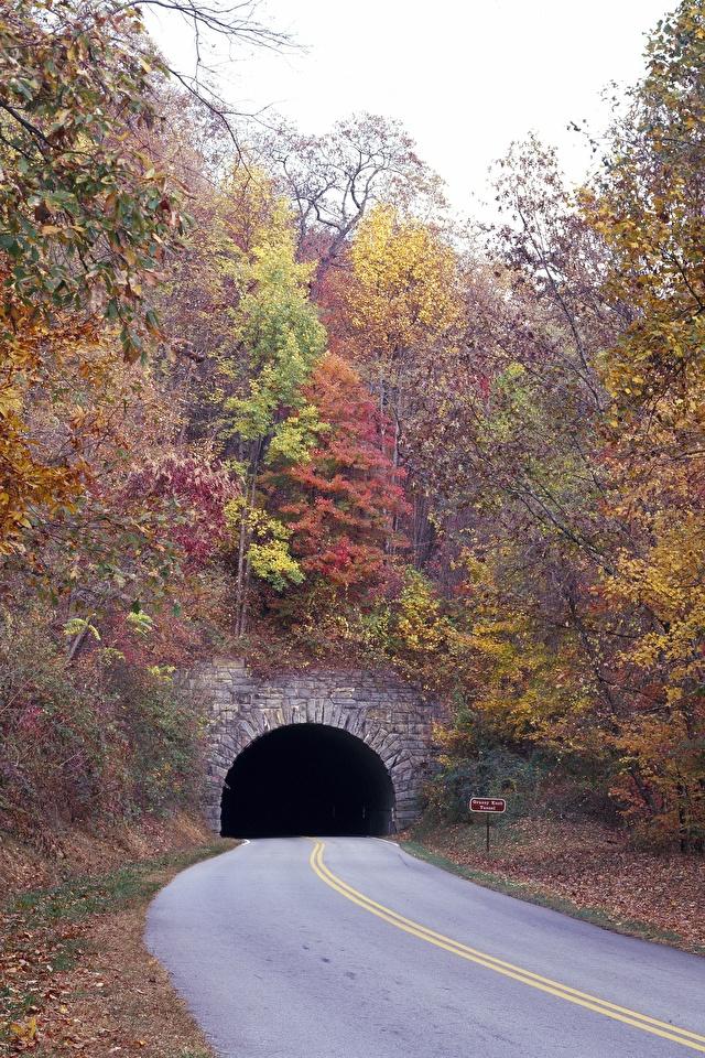 Картинка тоннель Осень Дороги дерева 640x960 для мобильного телефона Туннель осенние дерево Деревья деревьев