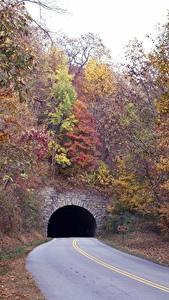 Картинка Осень Дороги Дерево Туннель