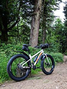 Обои Леса Велосипед Деревьев Тропа
