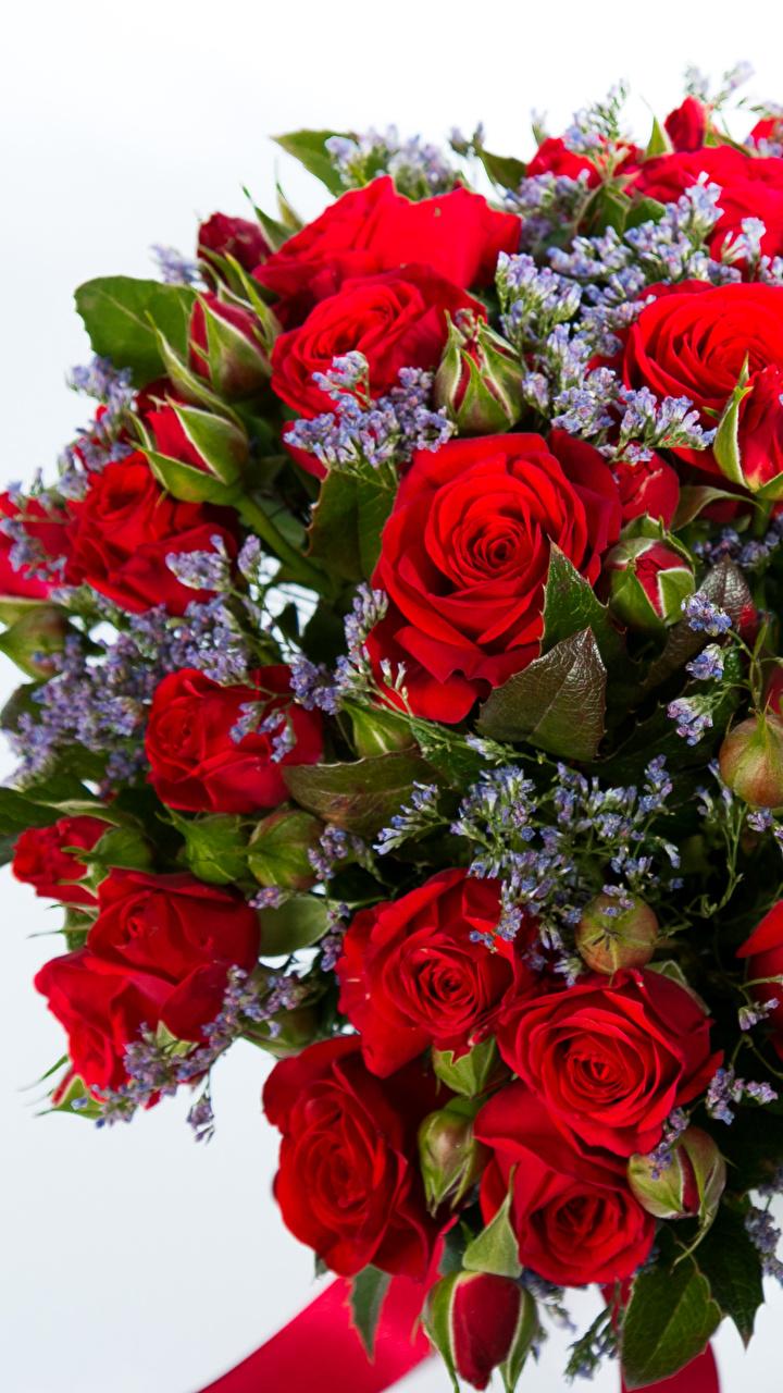 Розы Обои На Телефон Hd Вертикальные