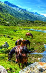 Обои Австрия Горы Луга Лошади Пруд Пейзаж Paznauntal Животные