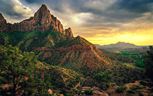 Фото Штаты Зайон национальнай парк Парки Утес Ветка Кустов Природа
