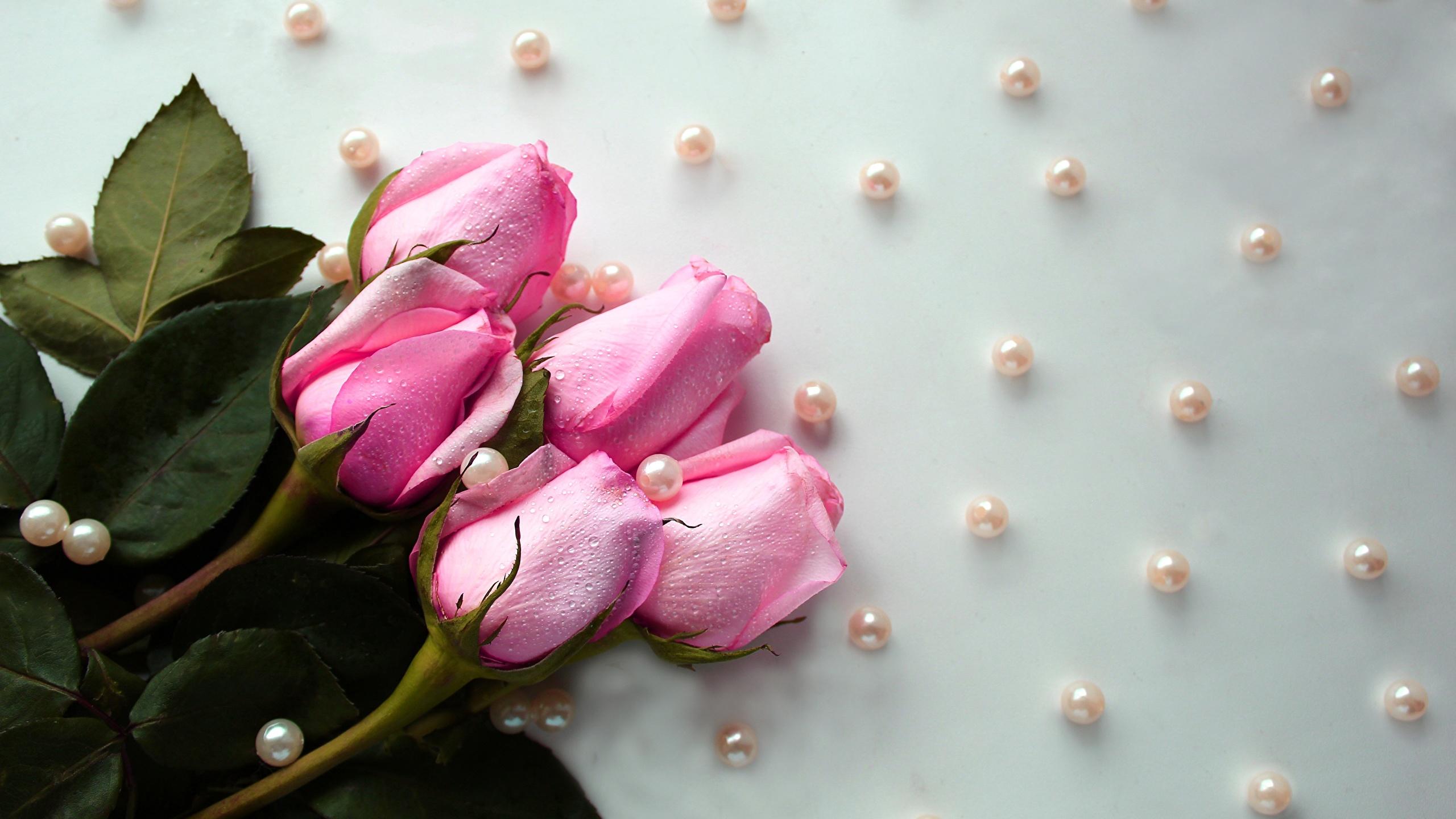Обои капли, цветы, розовый цветок, цветы. Цветы foto 7