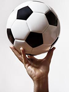 Фотография Футбол Белый фон Мяч Руки Спорт