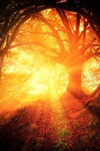 Фотография Утро Рассветы и закаты Леса Деревья Лучи света