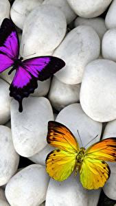 Фотографии Камень Бабочки Трое 3 Животные