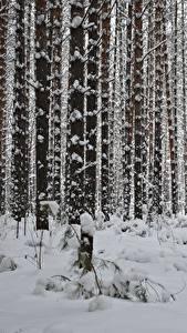 Картинка Зимние Леса Снег Деревья Ствол дерева