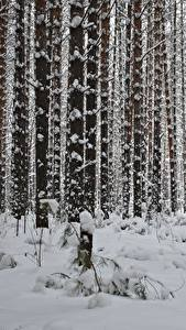 Картинка Зимние Лес Снеге Дерево Ствол дерева