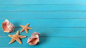 Картинка Ракушки Морские звезды Доски