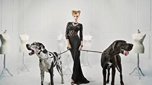 Обои Собаки Немецкий дог Платья Животные
