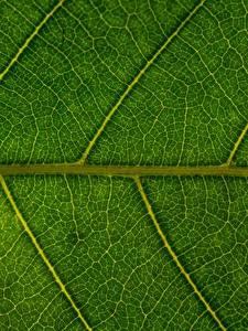 Фото Текстура Вблизи Листва Природа