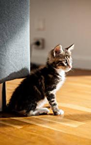 Фотографии Кошки Котята