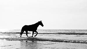 Фото Лошади Волны Силуэты Животные