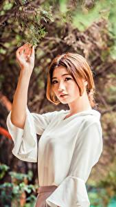Фотография Азиатки Ветвь Листва Блузка Рука Шатенки девушка