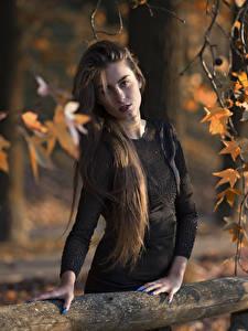 Обои Ветвь Листва Рука Платья Волос Смотрит Шатенки Federica девушка