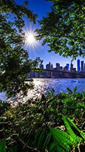 Картинка Штаты Дома Мосты Нью-Йорк Солнце Ветки Залив Brooklyn Bridge город