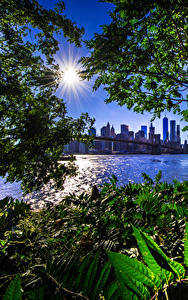 Картинка Америка Дома Мост Нью-Йорк Солнце Ветки Залив Brooklyn Bridge город