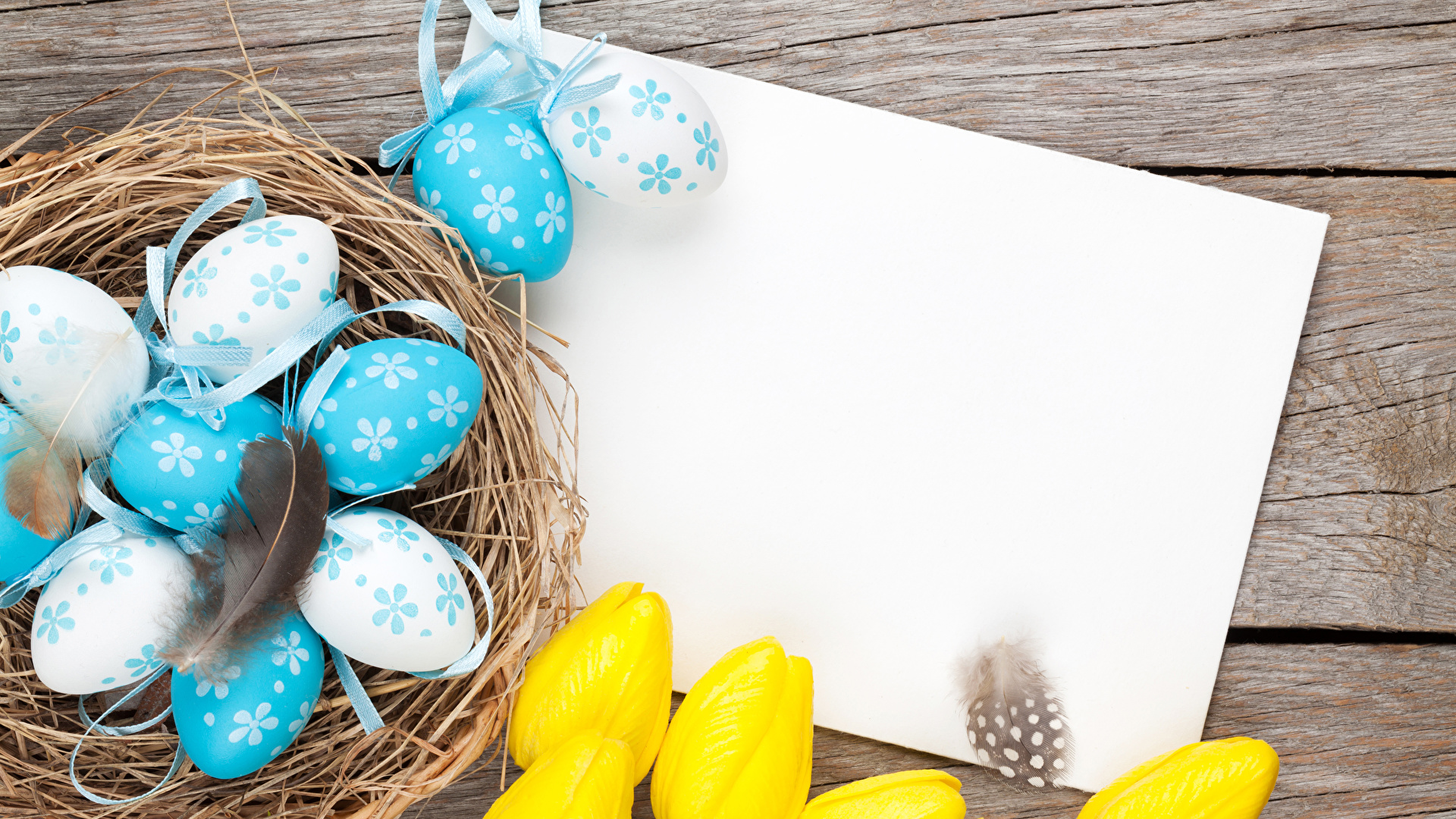 Обои перо, яйца. Разное foto 10