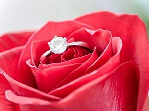 Фотографии Вблизи Розы Макро Алмаз обработанный Кольцо