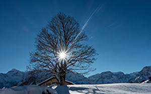 Обои Швейцария Зимние Горы Снег Деревья Лучи света Braunwald Природа