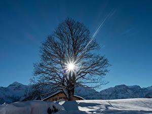 Обои Швейцария Зимние Гора Снегу Деревья Лучи света Braunwald
