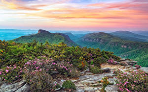 Картинка США Парки Горы Пейзаж Кусты Roan Mountain Rhododendron Gardens