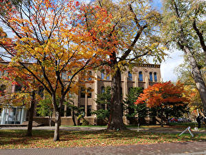 Фото Япония Дома Осенние Деревья Hokkaido University Sapporo