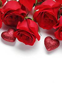 Фотография Розы День всех влюблённых Красный Сердечко Белый фон Шаблон поздравительной открытки