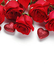 Фотография Роза День всех влюблённых Красный Сердечко Белым фоном Шаблон поздравительной открытки