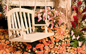 Обои Розы Белокрыльник Скамья Цветы
