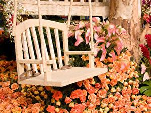 Обои Роза Каллы Скамья Цветы