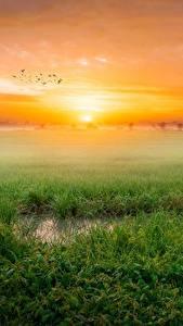 Картинки Пейзаж Рассвет и закат Траве Тумане Природа
