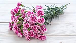 Фотографии Букеты Гвоздики Розовая Цветы